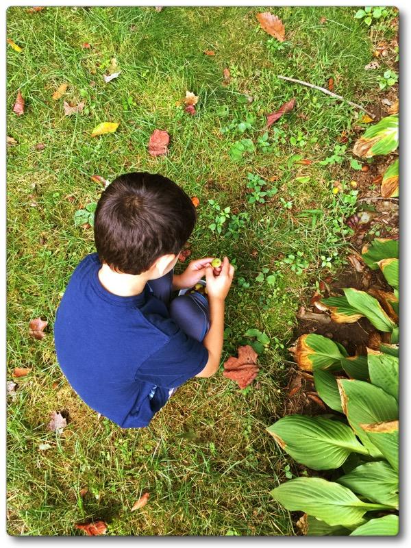 auggie leaves