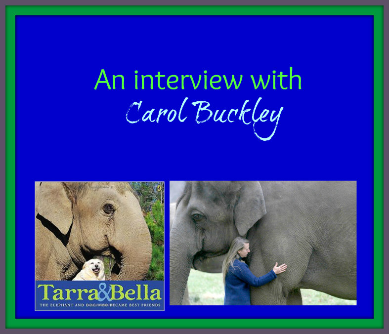carol buckley interview